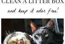 cat & dog care / by Stephanie Ann