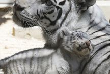 Mummy & babies
