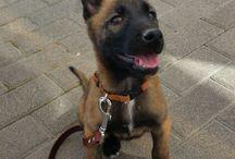 hond Quatro