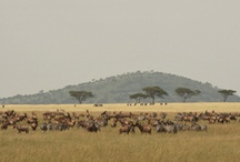 PTA Maasai Mara, Kenya