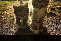 Katzen Cats