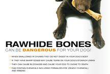 Dog Health & Nutrition Info