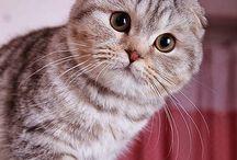 Pisici / Pisicute