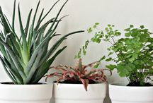 DIY: Flower pots decor