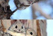 Cute Critters =^.^= / Just the fluffiest, fattest and adorable little critters around ^_^