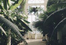 Little Paradise / Gardens, plants, & Flowers...