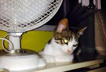 Berci / Ő a mi második közös cicánk, igazi kis energiabomba. :)