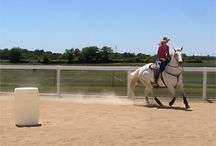 "Horses / I love Horses and work with ""problem"" horses and horsemanship and I absolutely love it!"