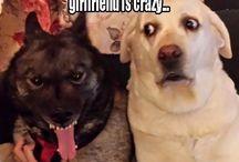 Grappige Honden