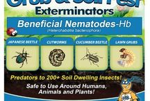 Garden & Beneficial Insects