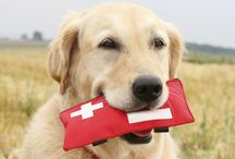 EDUCATION/ARTICLES / Information you should know about how some meds can affect your pets.