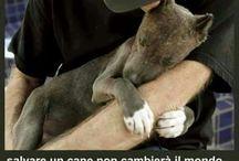 Umanità...amore e tenerezza