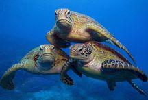 turtletitties_files