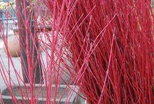 Branches | Guide to Winter Decor