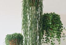 plantos