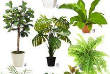 Plantas p/ dentro de casa/ indoor plants
