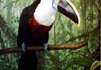 Pintura Animales Aves
