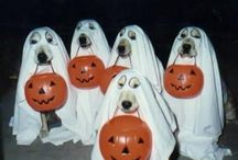 Holiday (Halloween) / All things Halloween :) boo! / by Green Leaf Pets