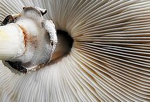 Colors and Textures - White / Inspirations / by Tracy Potter