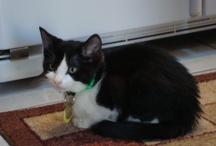 Buster My New Kitten / by Bonnie Kreger