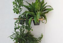 Green plants and herbs