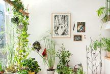 Indoor plants