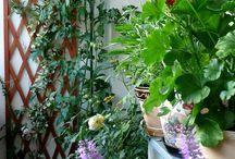 My balcony / balcony gardener