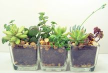 Plants for the Home / by Tins Cruz