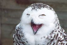 owl. / by Shauna Guinn