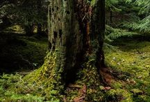 LAS_FOREST