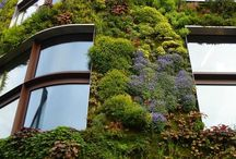 Green Walls / by Southwest Chelsea