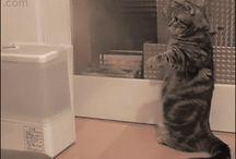 gifs cat