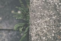 Plants // Foliage