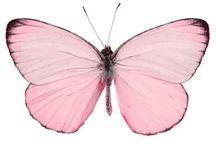 vlinders en vogel [kooi]