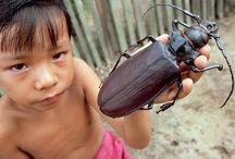 Non solo insetti