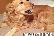 Funny Dogs!