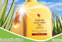 Forever, băuturi nutritive /  Ingredientul principal al acestor produse este reprezentat de gelul proaspăt din frunza de Aloe vera, ce constitue un supliment inegalabil al unei diete sănătoase. Consumaţi zilnic una dintre aceste băuturi nutritive pentru a imbunătăţi digestia şi absorţia substanţelor nutritive, pentru a spori cantităţile de vitamine, minerale şi aminoacizi prezente în dieta dumneavoastră şi pentru a vă bucura de un stil de viaţă sănătos.