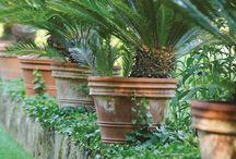 vasi di piante