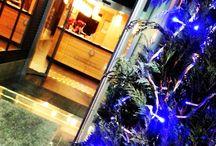 Navidad - Xmas / En esta época del año casas particulares y comercios se llenan de luces y decoraciones propias como el arbol de navidad, el belen o la flor de pascua. Nosotros queremos que nuestros clientes se encuentren como en casa.