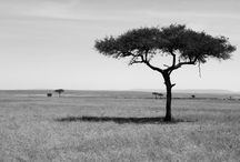 Safari Photos