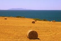 hay bales field