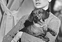 Celeb Hounds / Famous persons with their Dachshunds