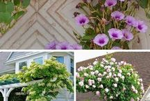Climbing Plants and Support