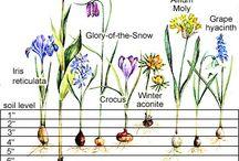 Plants Bulbs