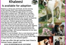 Featured Dogs & Cats / Here you will find a selection of our featured dogs and cats that are available for adoption. This will be updated regularly :-)