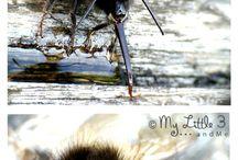 Classroom Bees