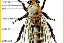 Thema 'Kriebelbeestjes'