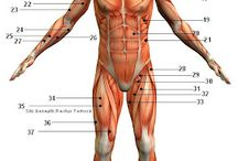 Science of the Human Body