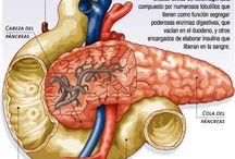 disertacion sistema digestivo