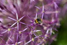 Gardens for wildlife / The right plants & habitats will bring wildlife to any garden